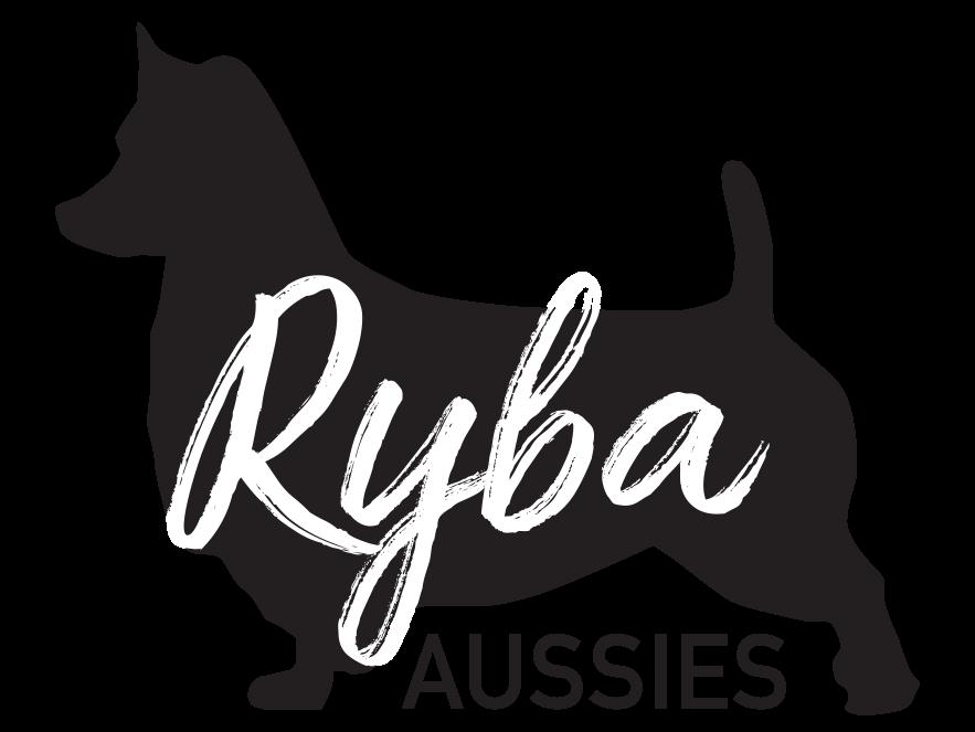 Ryba Australian Terriers